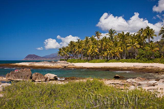 Hawaii and Palm Trees